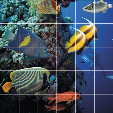 Glasfliesen Mit Eigenem Motiv Color - Fliesen mit eigenem foto